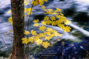 Autum leaves decorate the river backdrop of flowing water