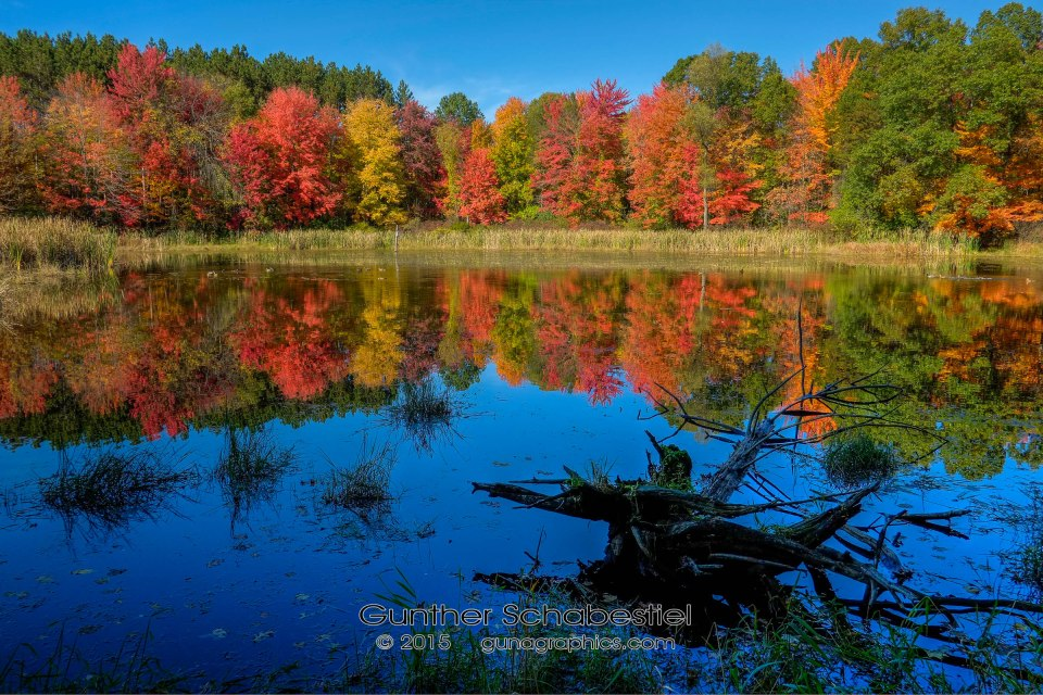 Proud Lake Fall Colors, tree stump in swamp 2013